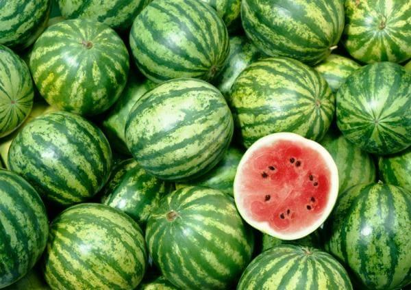 watermelon_biofuel