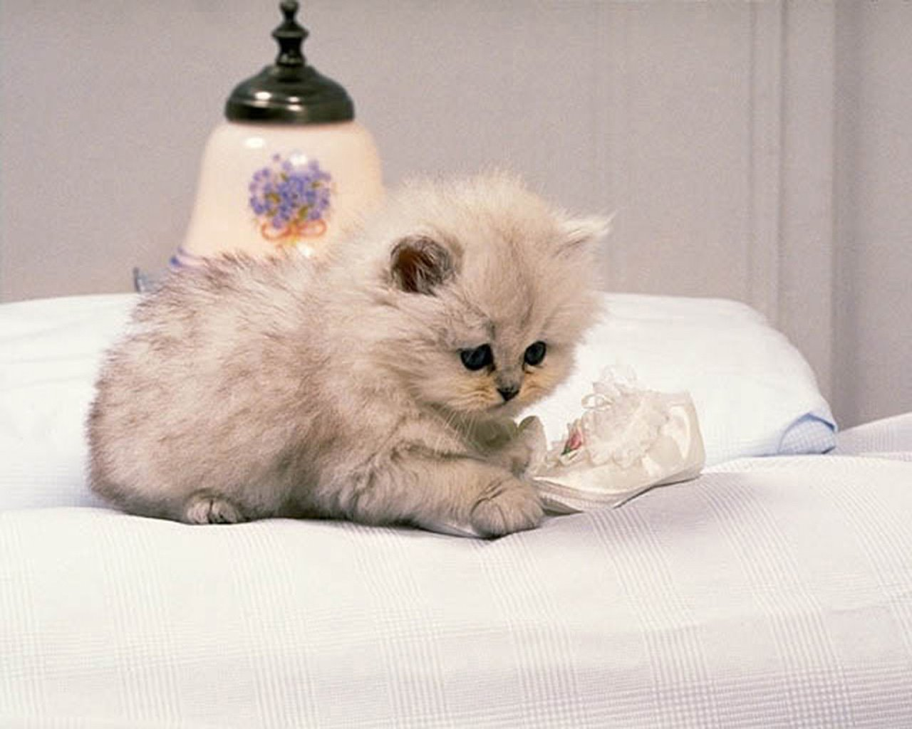 funny cute cats 19 hd wallpaper - funnypicture