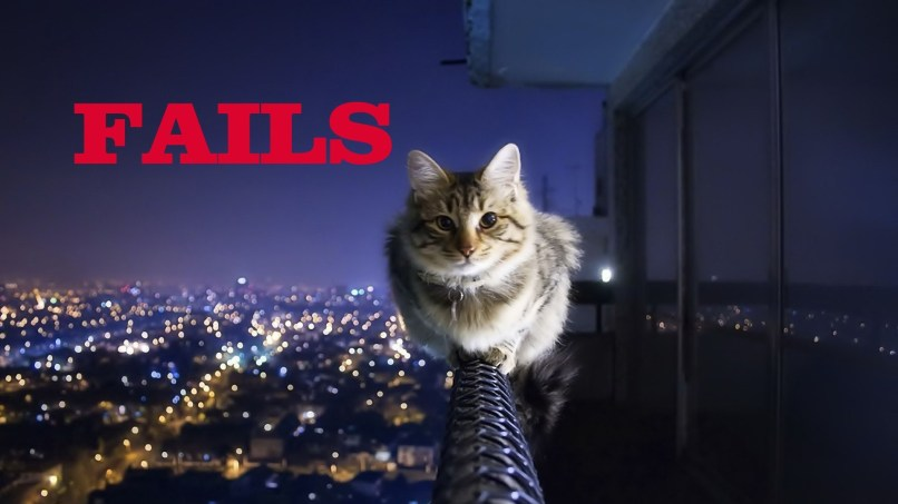 Epic Funny Cat Fails 1 Cool Wallpaper Funnypicture Org