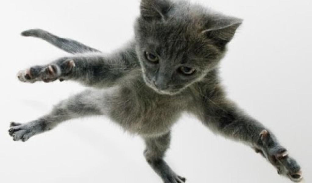 Cute Cats Image Wallpaper Funny Cat Fail Pics 13 High Resolution Wallpaper