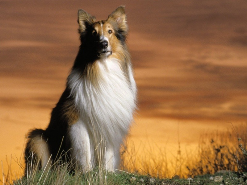 Small Cute Puppy Wallpapers 40 Wallpapers And Pictures Of Dogs