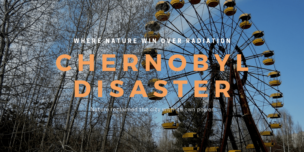Chernobyl Forest : Where Nature Win Over Radiation