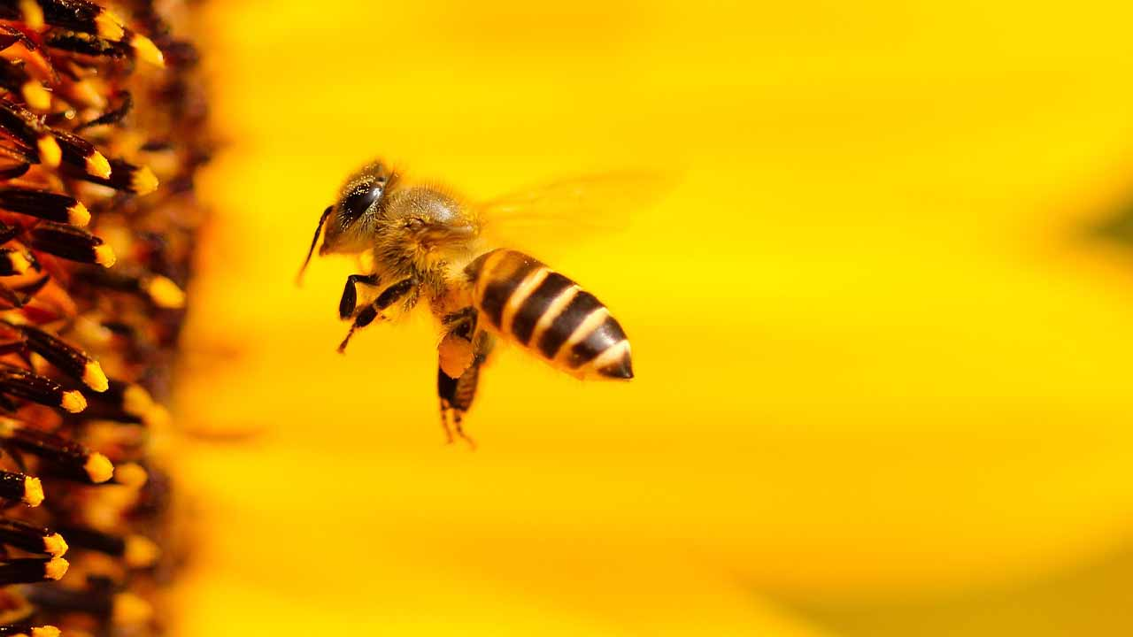 How to survive the most poisonous and deadliest animal like bee attack?