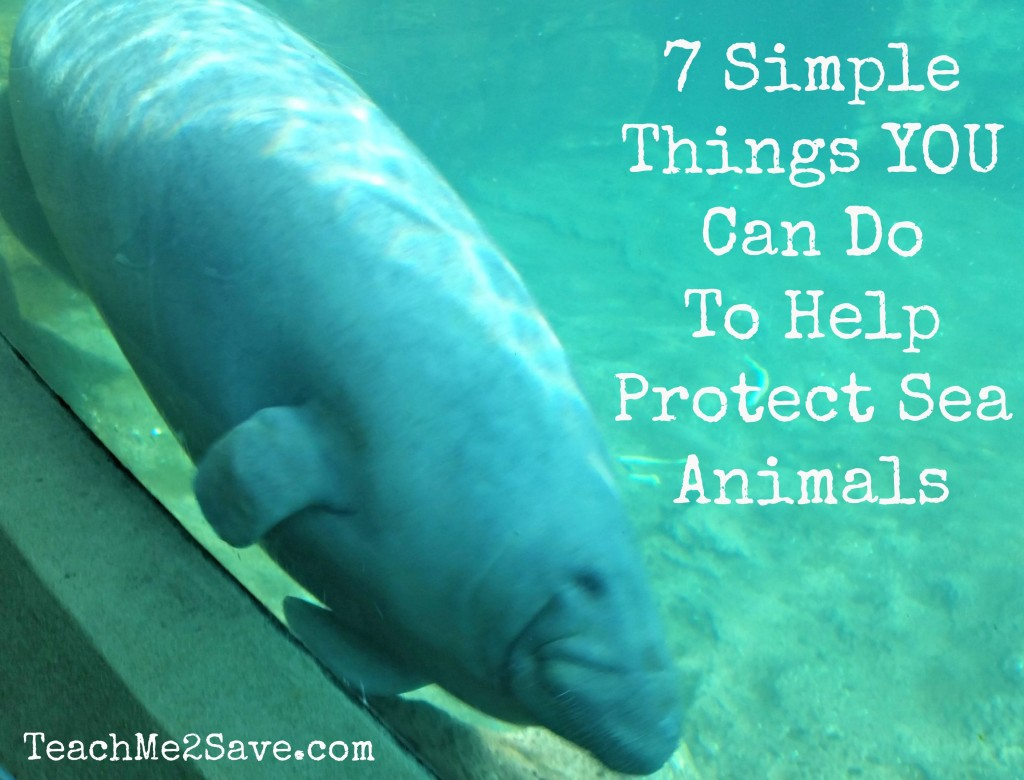 7 Simple Things You Can Do To Help Protect Sea Animals