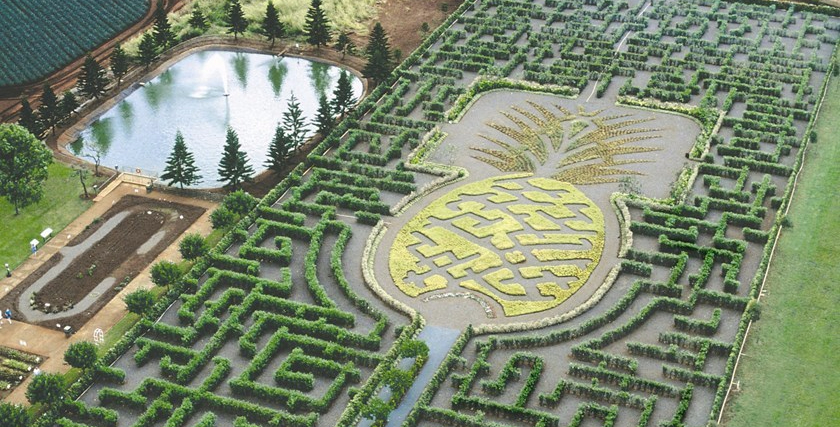 World's Largest Maze (Hawaii)