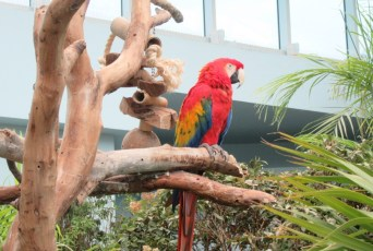 """Here's a Green-Winged Macaw"""