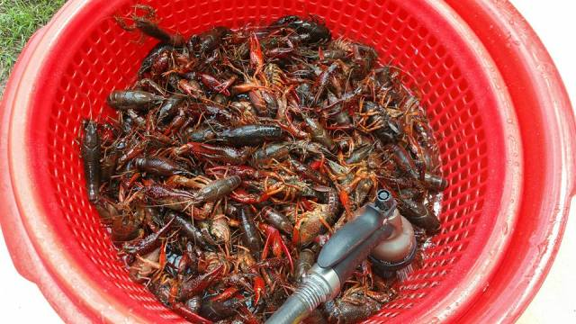 Crawfish Boils