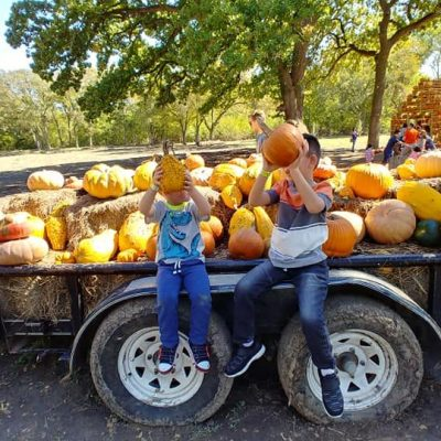 SWEET EATS FRUIT FARM FUN WEEKEND ACTIVITIES