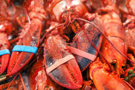 Things to do in new england - lobster