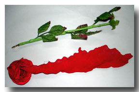 Silk-to-Rose-Plus