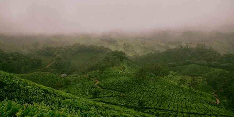 Farm Fields of Munnar