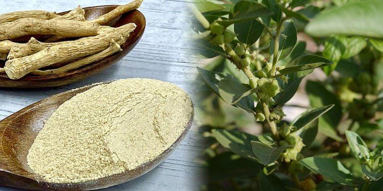 Ashwagandha- a magic herb
