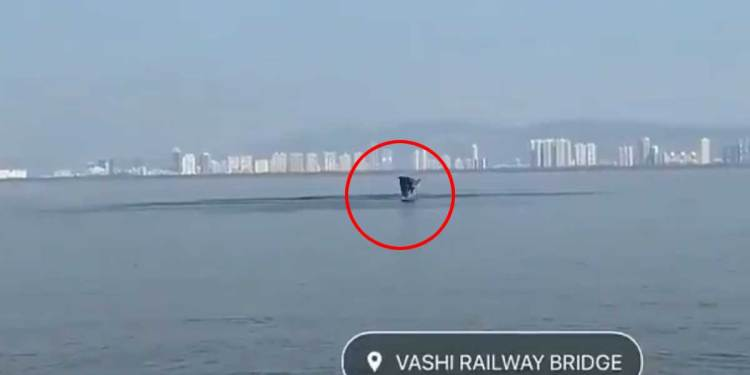 dolphins-spotted-in-vashi-crek