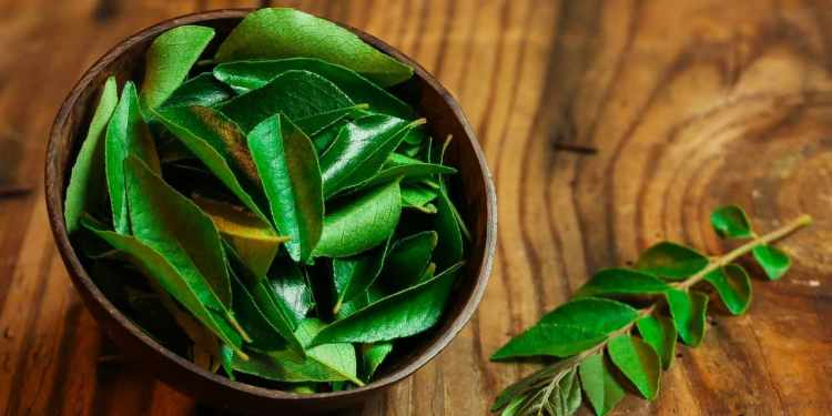 How To Store Curry Leaves For A Longer Period