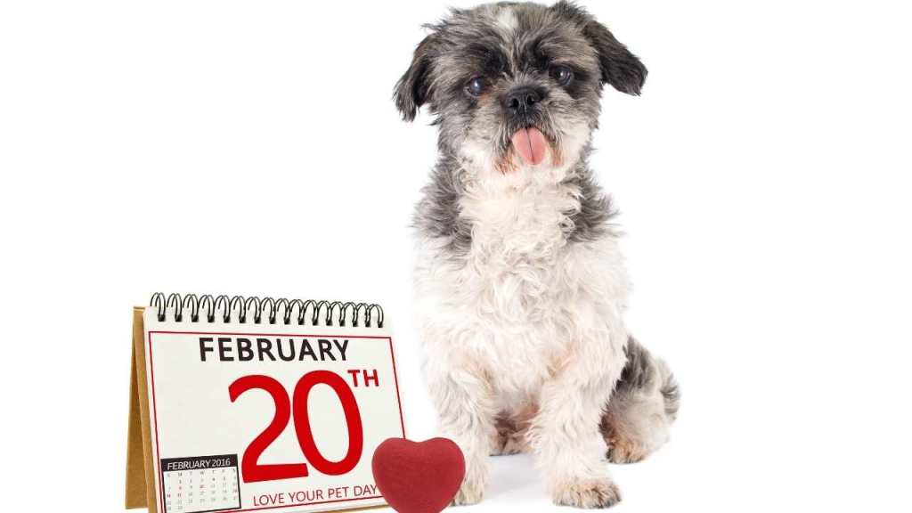 Love Your Pet Day - February 20