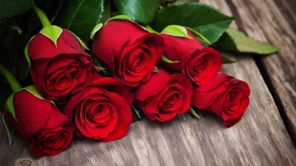 Red Roses on Rose Day