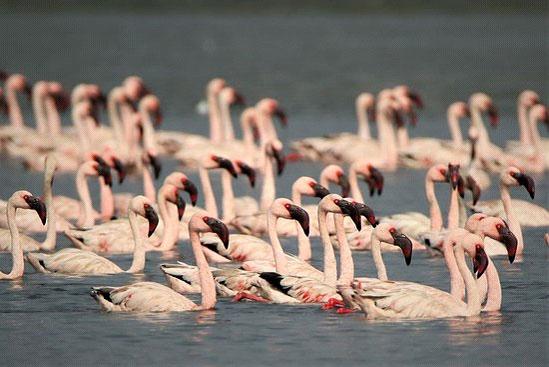 Thane Creek Flamingo Sanctuary--Ferry Ride