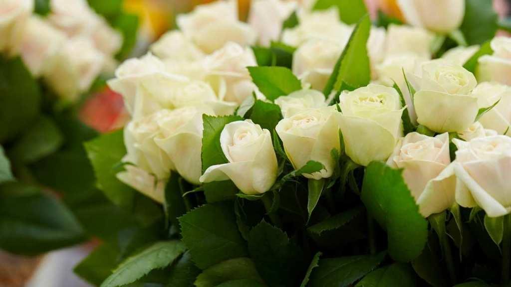 White Roses on Rose Day
