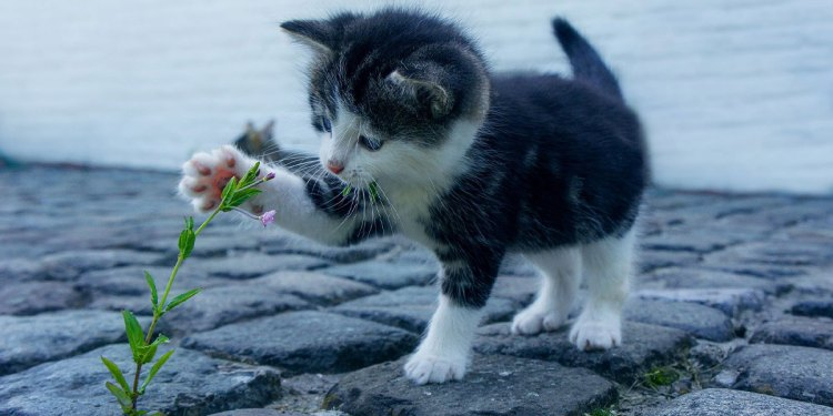 Celebrate International Cat Day (World Cat Day) On 8 August