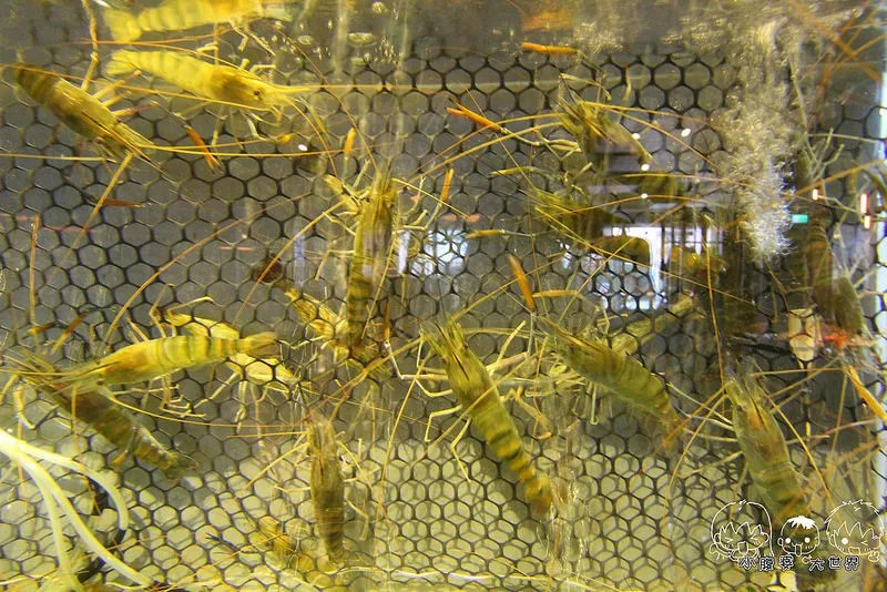 台中帝王蟹吃到飽1 019