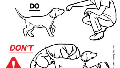 Photo of How (and How NOT) to Greet an Unfamiliar Dog