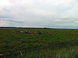 網走に行く手前の湿原付近の野生馬