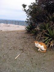 茂みのかげで風をしのぐ猫