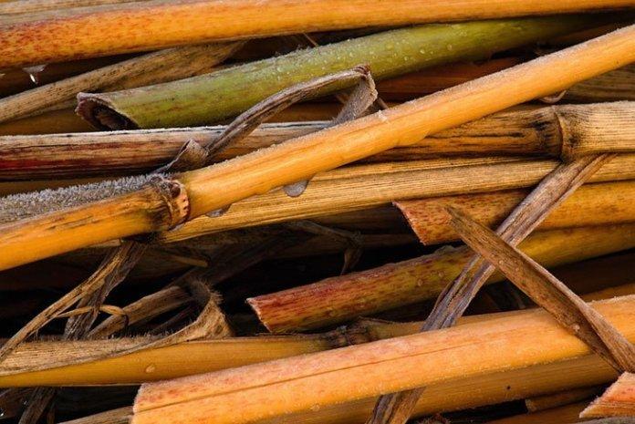 bambou 2 - Pour lutter contre la pollution plastique, une grande chaîne de restaurants japonais utilise désormais des pailles en bambou