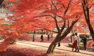 Réouverture d'un parc au Japon