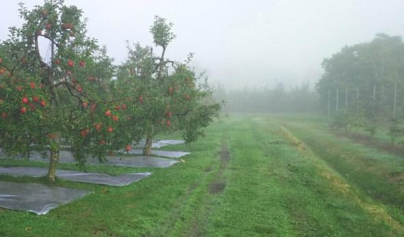 今朝の果樹園