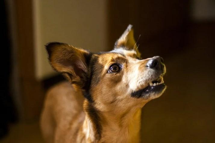 in home dog training brisbane   Brisbane In home dog training