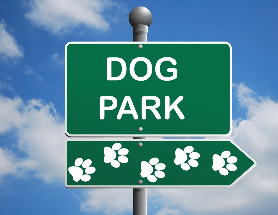 5 Hidden Dangers in Dog Parks | Dog Behaviourist Brisbane