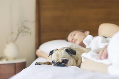 Winter Dog Training Activities | Dog behaviouralist Brisbane