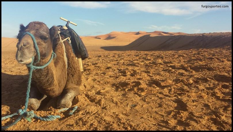 camelmaroc