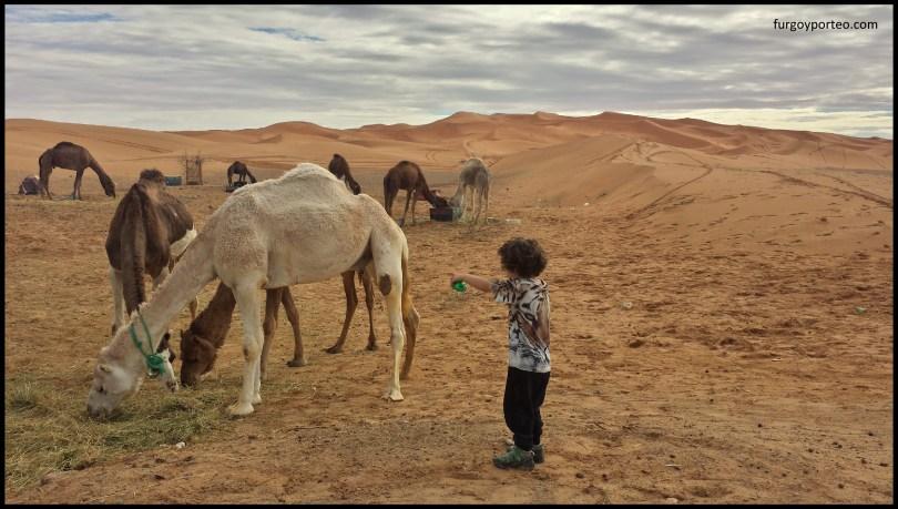 furgo-camells