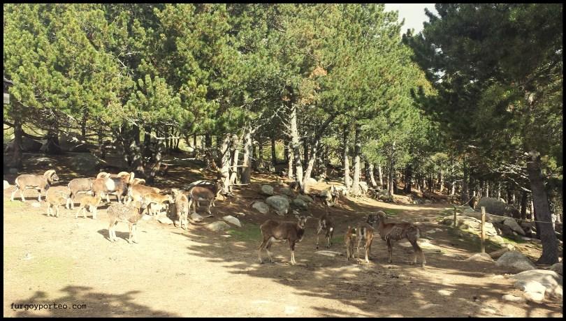 Pirineos Orientales - parc animalier les angles