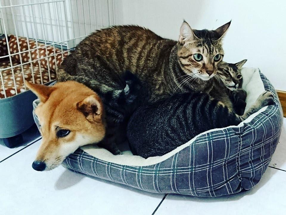 和貓一起長大的小米 16 Travel of Rice 小米遊記