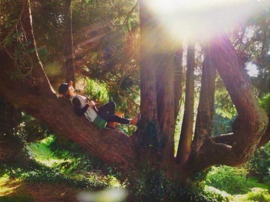 Kenzie tree.jpg