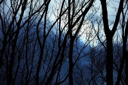 Twilight in winter