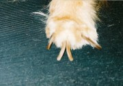 fast dogs nails grow - nail