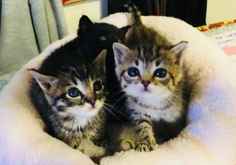 foster a cat or
