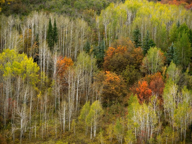 Wasatch Autumn