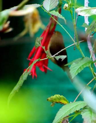 pajaro entre flores (3)