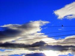 Pájaro en cuerdas 1