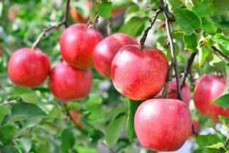 ふるさと納税「りんご」の還元率ランキング