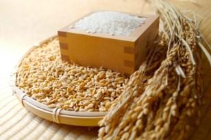新米 宮城の米「ひとめぼれ」(精米)8kg