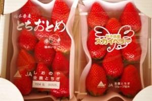 【期間限定】とちおとめ&スカイベリー 食べ比べセット イメージ