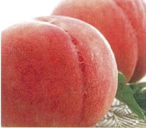 桃(種類おまかせ) 5kg イメージ