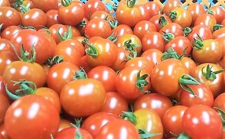 カラダに優しい「オーガニック ミニトマト3kg」 イメージ
