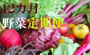 野菜【12ヶ月】定期便 香南市のお野菜詰め合わせコース